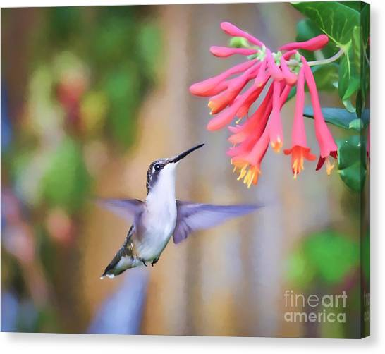 Wild Birds - Hummingbird Art Canvas Print