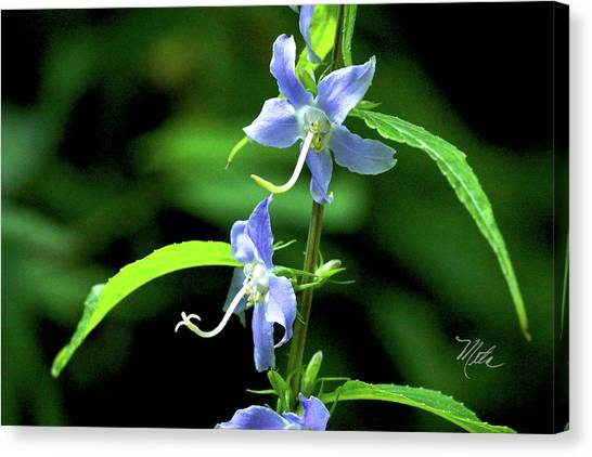 Wild Blue Flowers Canvas Print