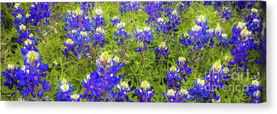Canvas Print featuring the photograph Wild Bluebonnet Flowers by D Davila