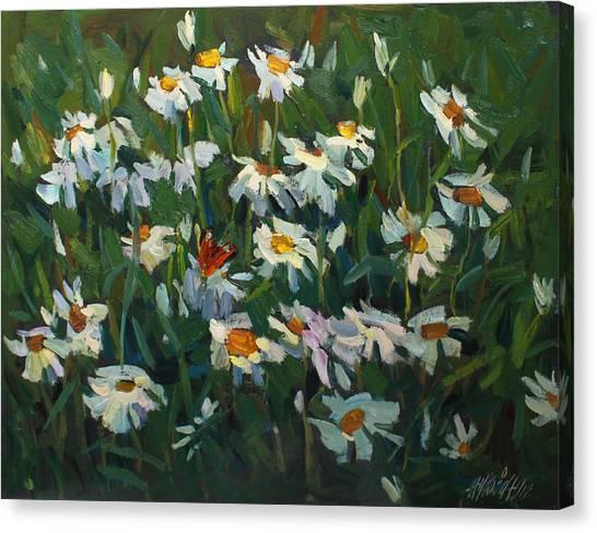 Wild Camomile Canvas Print