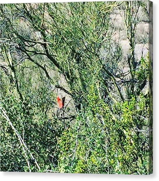 Football Teams Canvas Print - #wild #cardinal #arizona Life #camping by Stacy Rankin