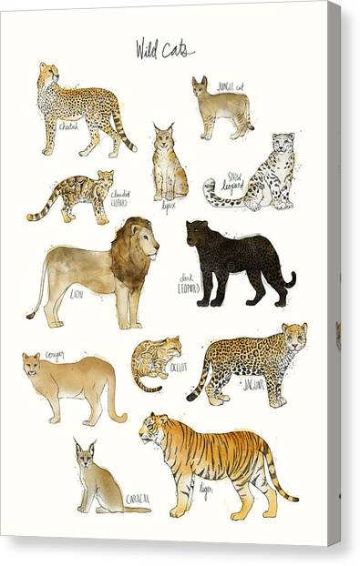 Cheetahs Canvas Print - Wild Cats by Amy Hamilton