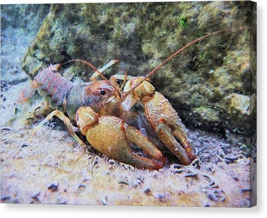 Wild Crawfish  Canvas Print by JC Findley