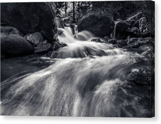 wild creek in Harz, Germany Canvas Print