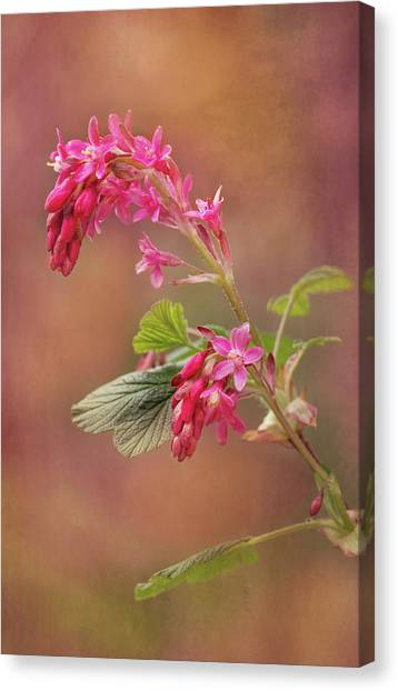 Wild Berries Canvas Print - Wild Currant Blossom by Mary Jo Allen