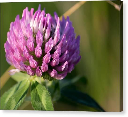 Wild Flower Bloom  Canvas Print