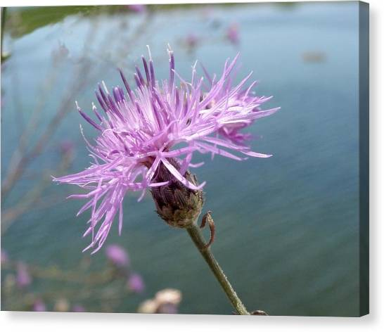 Wild Flower By The Lake Canvas Print