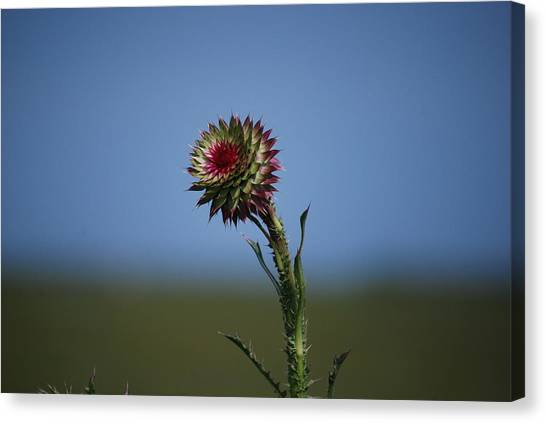 Wild Flower Canvas Print by John Roncinske
