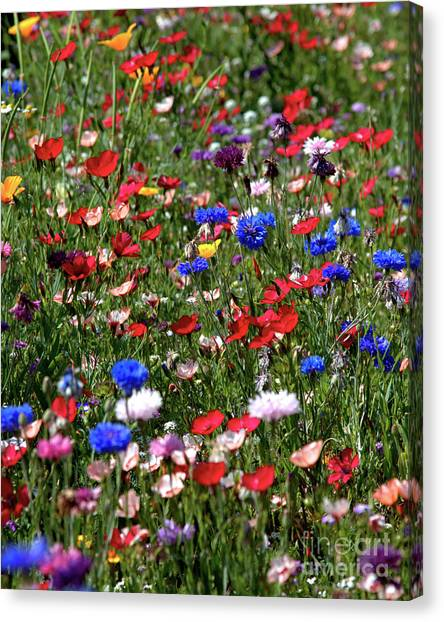 Wild Flower Meadow 2 Canvas Print