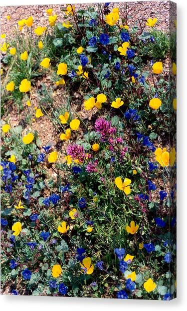 Wild Flowers Canvas Print by Eliot LeBow