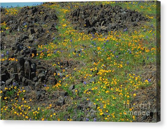 Wild Flowers Canvas Print by Richard Verkuyl