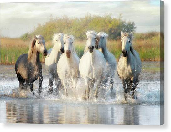 Wild Friends Canvas Print