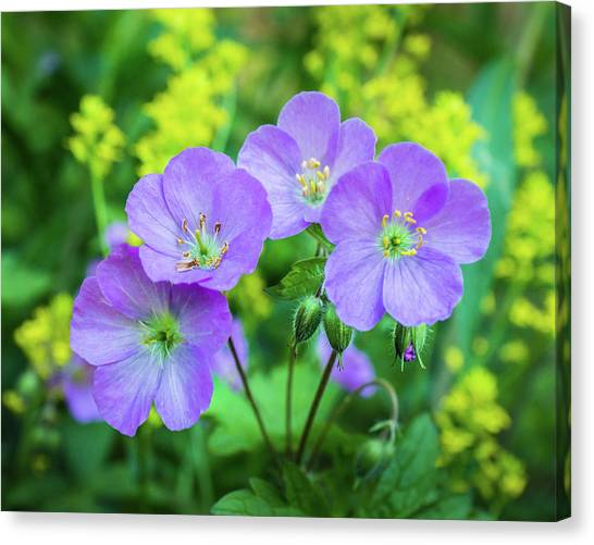 Wild Geranium Family Portrait Canvas Print