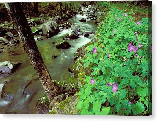 Wild Geraniums On Bradley Fork Canvas Print by Alan Lenk