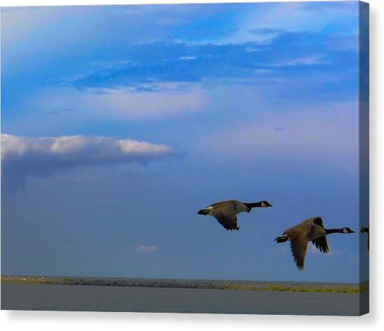 Wild Goose Chase Canvas Print
