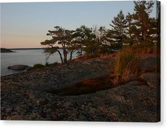 Wild Grass At Sunset - Georgian Bay Canvas Print