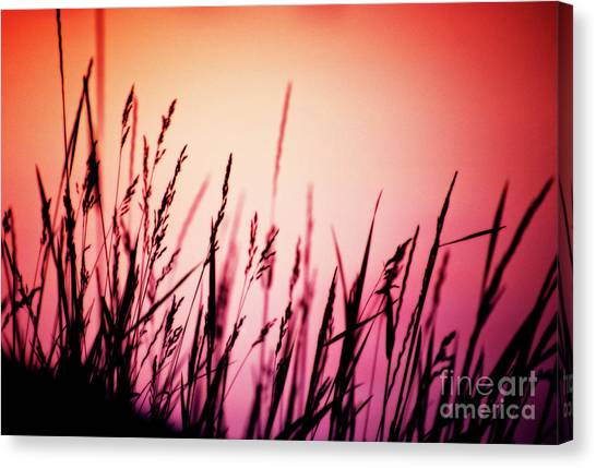Canvas Print featuring the photograph Wild Grasses by Scott Kemper