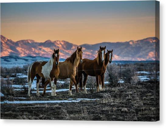 Wild Horse Group Canvas Print