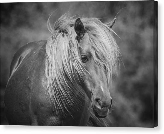 Maryland Horses Canvas Print - Wild Horse Of Assateague by Stephanie McDowell