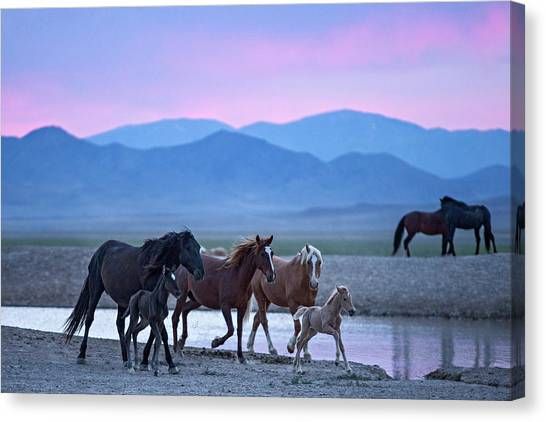 Wild Horse Sunrise Canvas Print