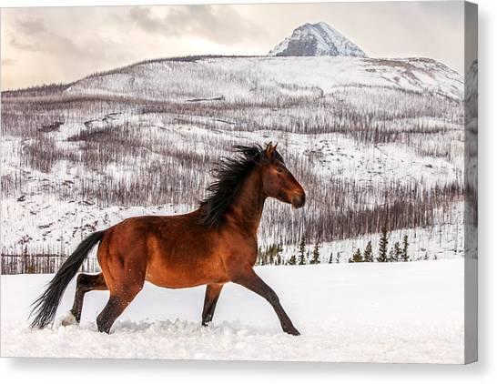 Winter Canvas Print - Wild Horse by Todd Klassy