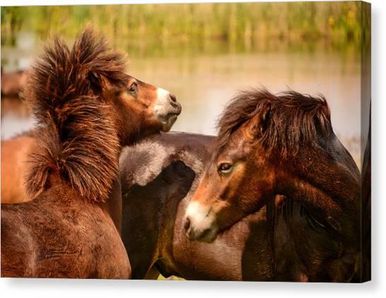 Wild Horses 5 Canvas Print