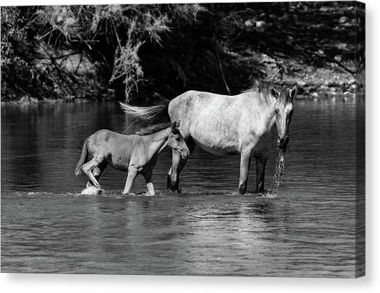 Wild Horses Black And White Canvas Print