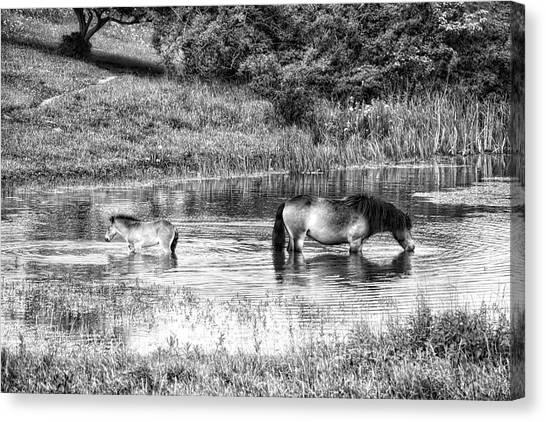 Wild Horses Bw2 Canvas Print