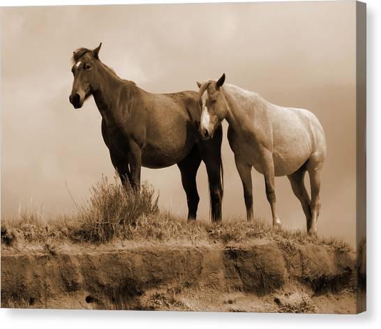 Wild Horses In Western Dakota Canvas Print