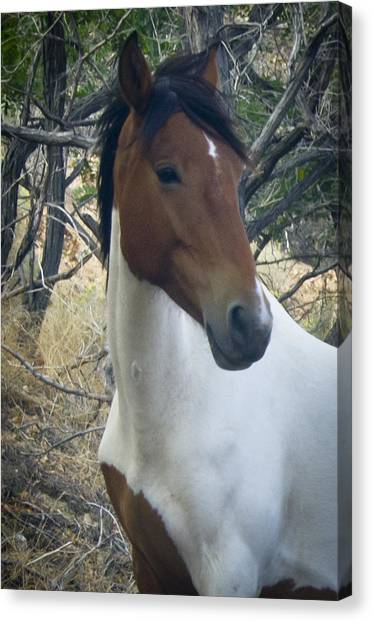 Canvas Print featuring the photograph Wild Horses Of Nevada 2  by Catherine Sobredo