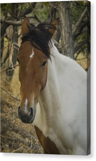 Canvas Print featuring the photograph Wild Horses Of Nevada 3 by Catherine Sobredo