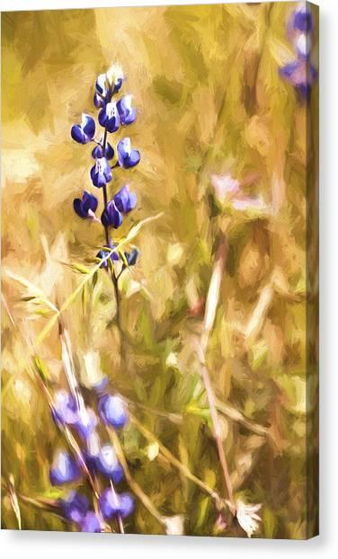Lavendar Canvas Print - Wild In The Fieldiii by Jon Glaser