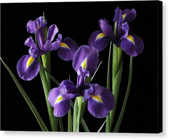 Wild Iris Canvas Print