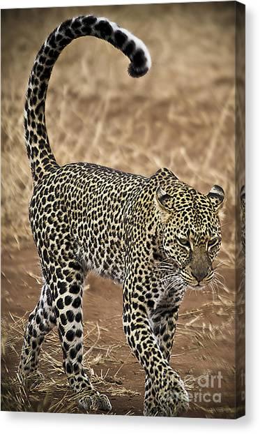 Wild Lady Canvas Print by Alessandro Giorgi Art Photography