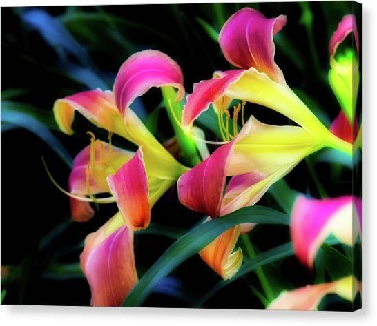 Wild Lily Canvas Print