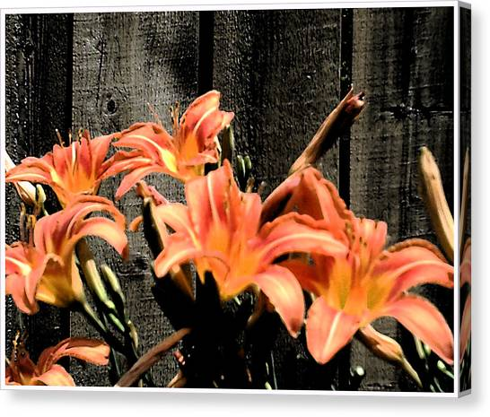 Wild Lily's Canvas Print by Richard N Watkins