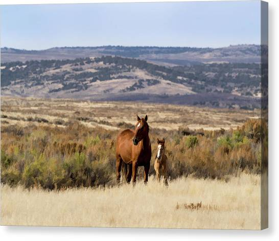 Wild Mare With Young Foal In Sand Wash Basin Canvas Print