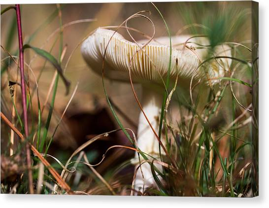 Portobello Mushroom Canvas Print - Wild Mushroom by Gestalt Imagery