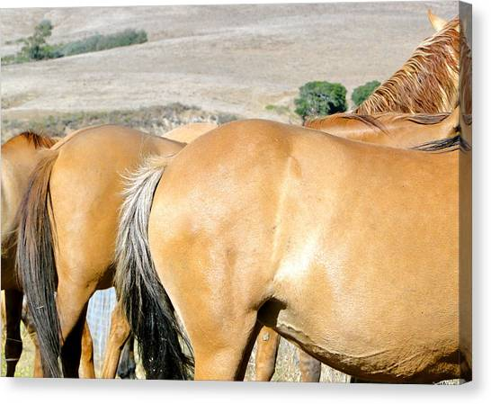 Dun Horse Canvas Print - Wild Mustang Mares by Liz Vernand