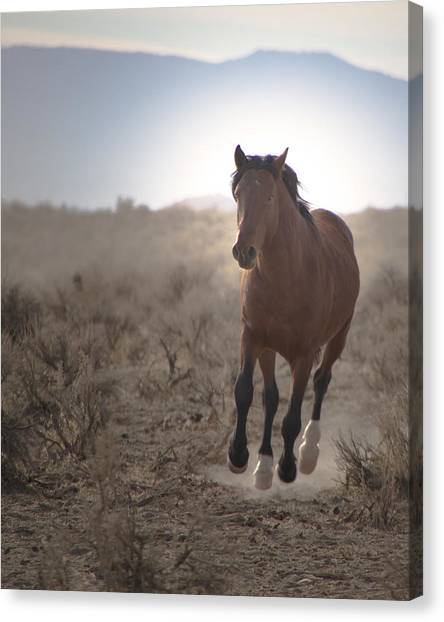 Wild Mustang Stallion Running Canvas Print
