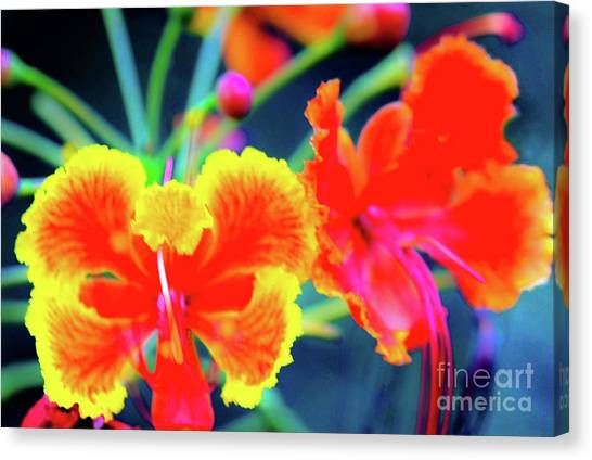 Wild Orchids In Hawaii Canvas Print