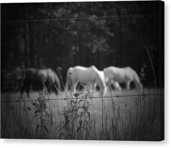 Wild Restraint Canvas Print by Jessica Burgett