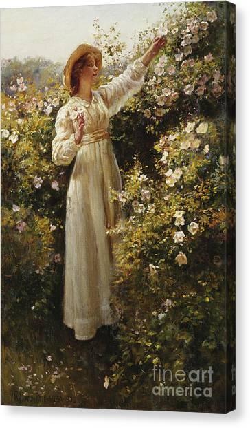 Victorian Garden Canvas Print - Wild Rose 1908 by Robert Payton Reid