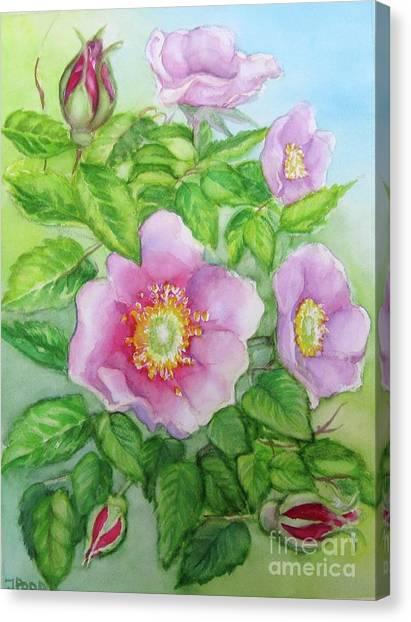 Wild Rose 3 Canvas Print