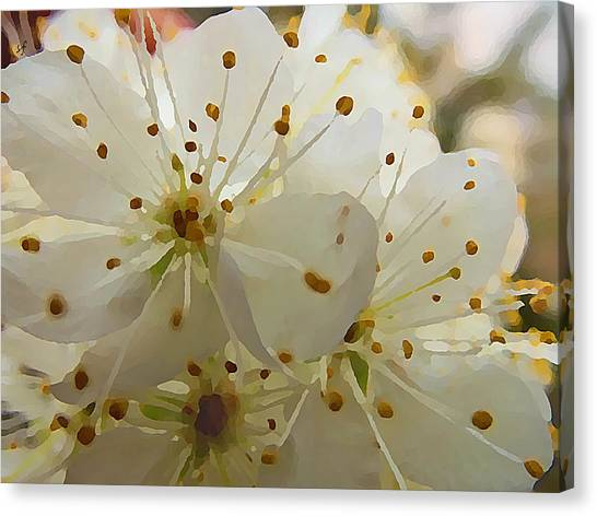 Wild Sand Plum  Canvas Print