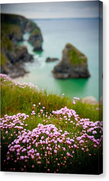 Wild Sea Pinks In Cornwall Canvas Print