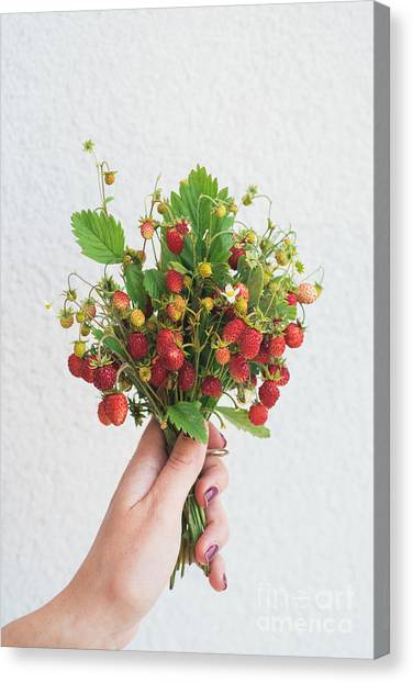 Fruit Canvas Print - Wild Strawberries by Viktor Pravdica