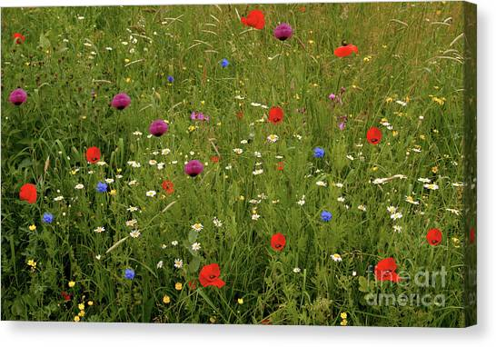 Wild Summer Meadow Canvas Print