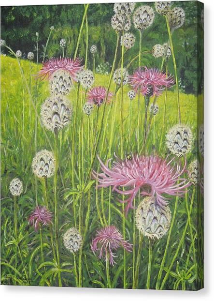Wild Thistles Canvas Print
