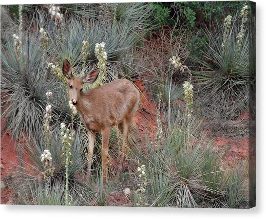 Mule Deer Canvas Print - 'wild' Times At Garden Of The Gods Colorado by Christine Till